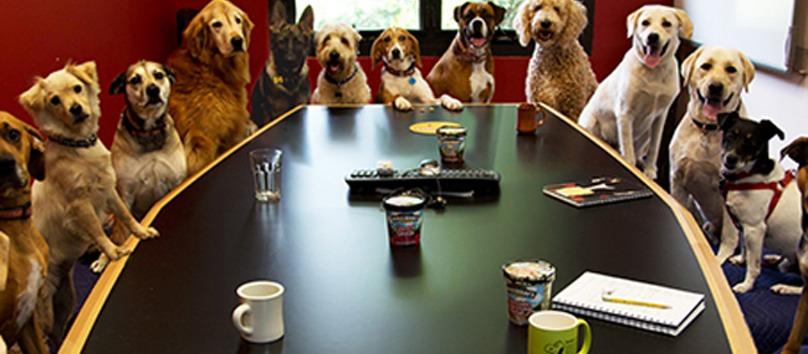 oficinas para perros